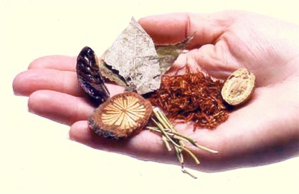 יד עם מבחר עלים וצמחי מרפא